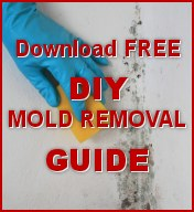 FREE DIY Mold Removal Guide